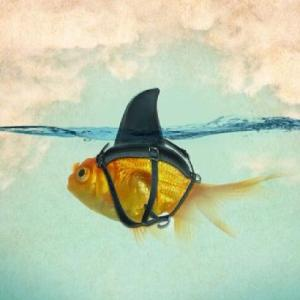 1_fish shark