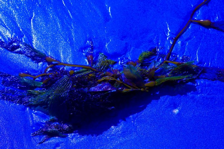 BEACH(SEAWEED)2